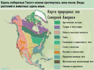 Вдоль побережья Тихого океана протянулась зона лесов. Виды растений и животны