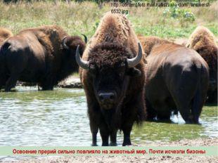 www.m mc.ru Освоение прерий сильно повлияло на животный мир. Почти исчезли би