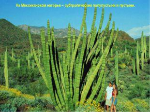 На Мексиканском нагорье – субтропические полупустыни и пустыни. www.m mc.ru