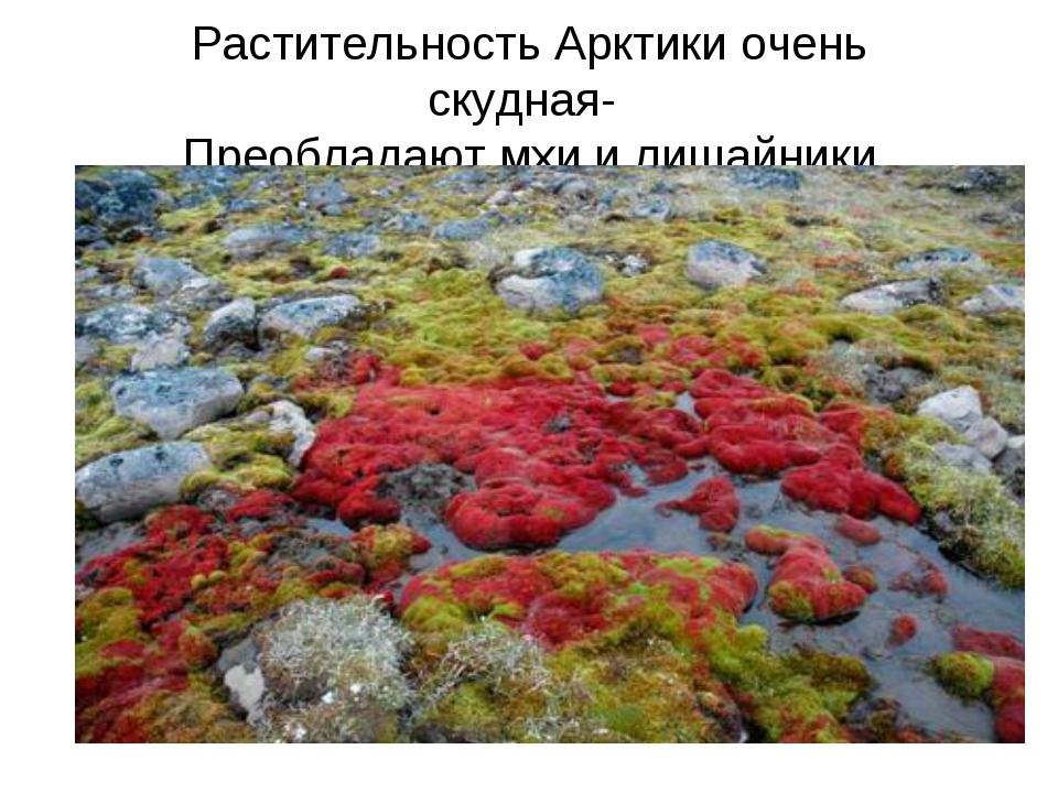 Растительность Арктики очень скудная- Преобладают мхи и лишайники