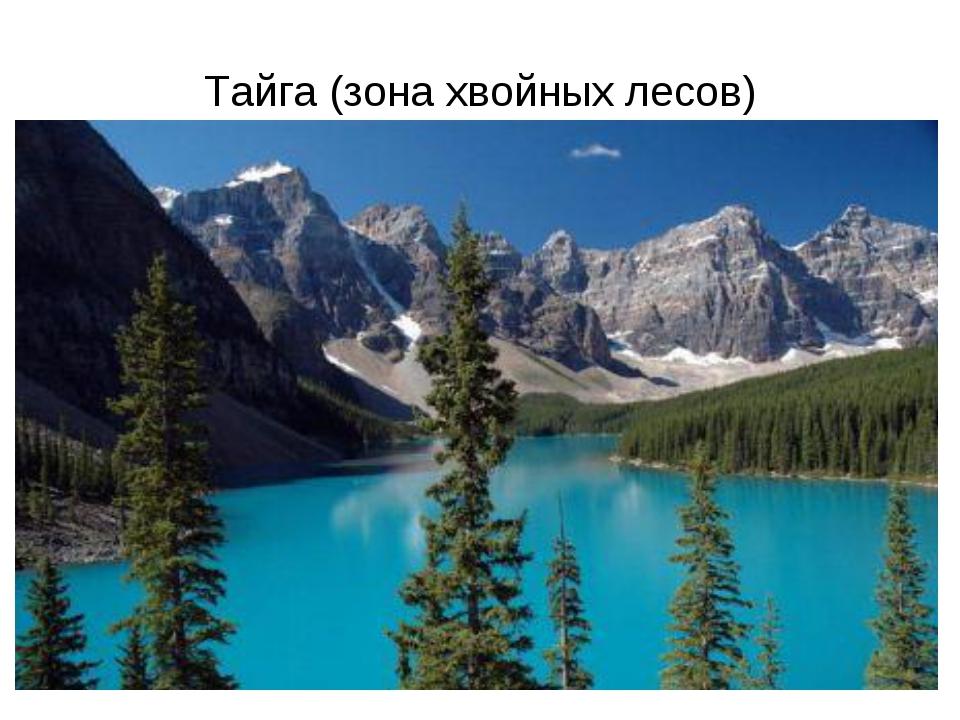 Тайга (зона хвойных лесов)