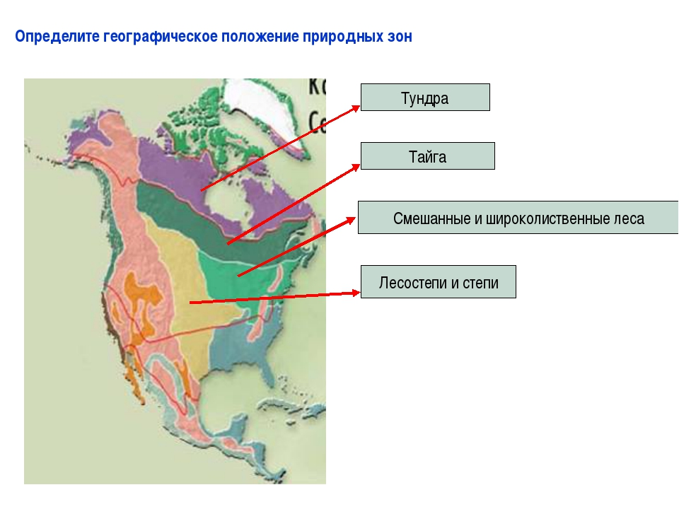 Определите географическое положение природных зон Тундра Тайга Смешанные и ши...