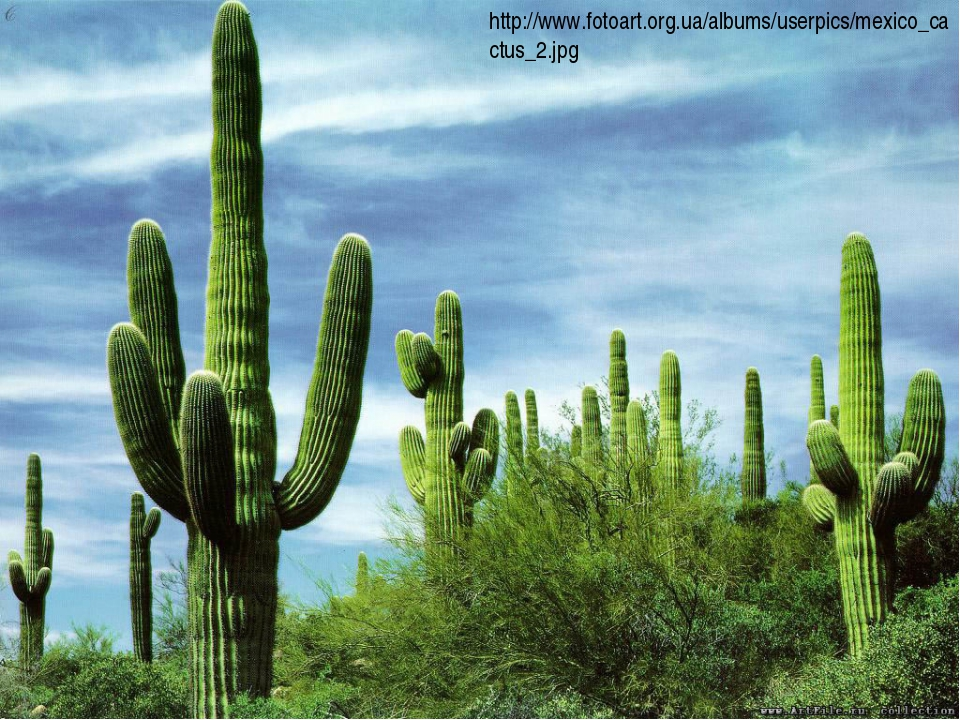 http://www.fotoart.org.ua/albums/userpics/mexico_cactus_2.jpg