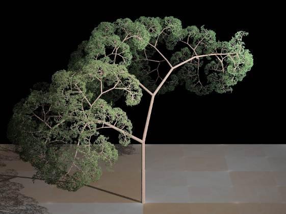 Fractal_tree_(Plate_b_-_2)
