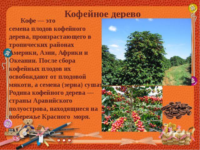 Кофейное дерево Кофе — это семенаплодовкофейного дерева, произрастающего в...