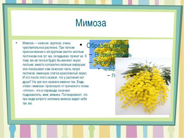 Мимоза Мимоза — нежное, хрупкое, очень чувствительное растение. При легком пр...