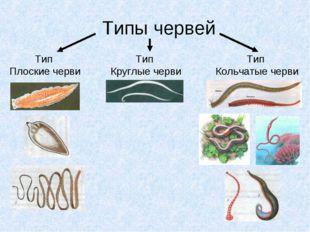 Типы червей Тип Плоские черви Тип Круглые черви Тип Кольчатые черви