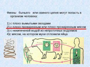 Финны бычьего или свиного цепня могут попасть в организм человека: 1) с плохо