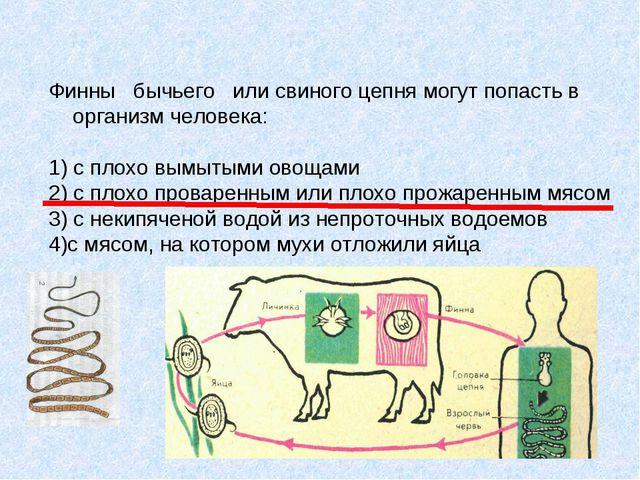 Финны бычьего или свиного цепня могут попасть в организм человека: 1) с плохо...