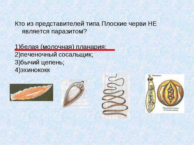 Кто из представителей типа Плоские черви НЕ является паразитом? 1)белая (моло...