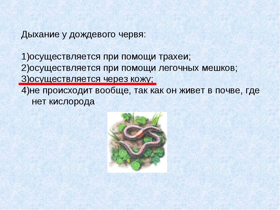 Дыхание у дождевого червя: 1)осуществляется при помощи трахеи; 2)осуществляет...