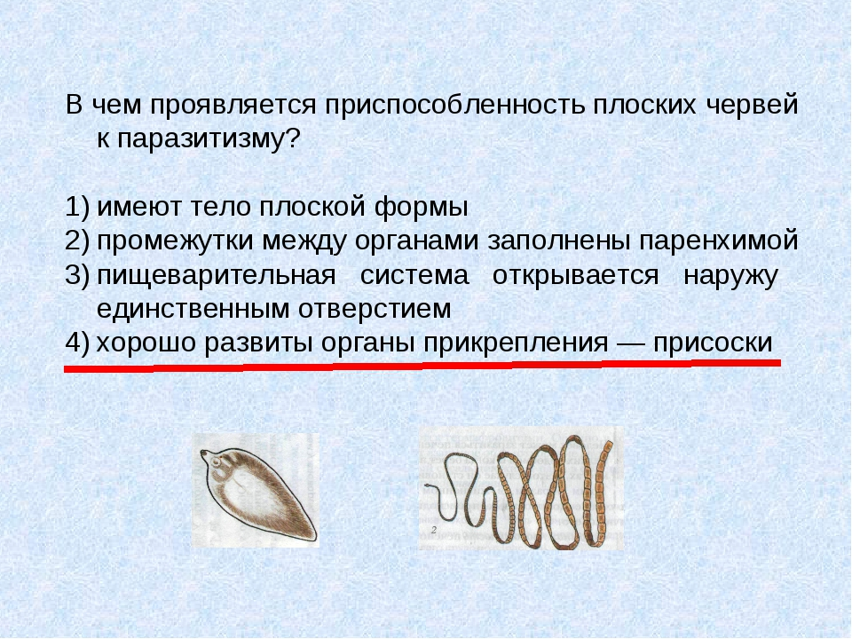 В чем проявляется приспособленность плоских червей к паразитизму? 1)имеют те...