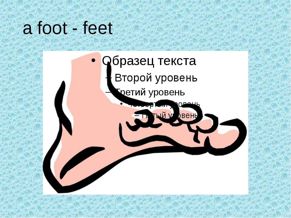 a foot - feet