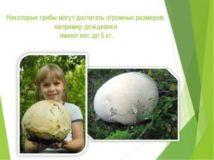 Некоторые грибы могут достигать огромных размеров: например дождевики имеют в