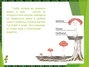 Грибы, которые мы привыкли видеть в лесу, состоят из плодового тела которое