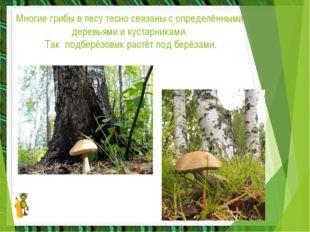 Многие грибы в лесу тесно связаны с определёнными деревьями и кустарниками. Т