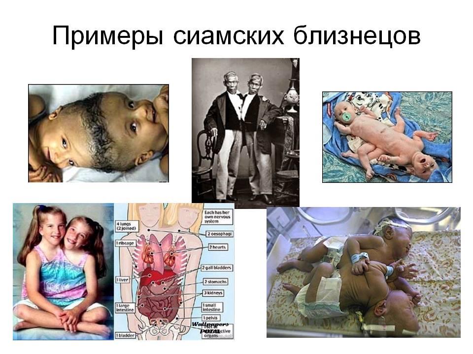 C:\Documents and Settings\Недомолкина\Мои документы\Загрузки\приказ 249 за 2013год\сиам. бл.jpg
