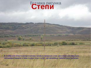Степи В Самарской области распространены луговые (северные) степи, настоящие