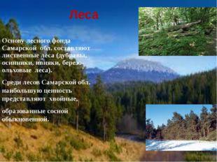 Леса Основу лесного фонда Самарской обл. составляют лиственные леса (дубравы