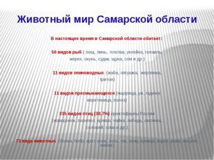 Животный мир Самарской области В настоящее время в Самарской области обитает: