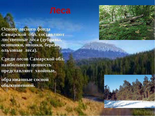 Леса Основу лесного фонда Самарской обл. составляют лиственные леса (дубравы...
