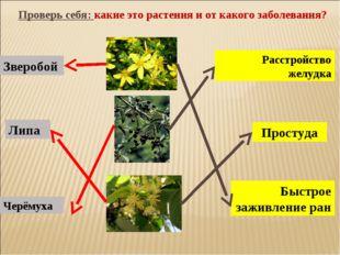 Проверь себя: какие это растения и от какого заболевания? Быстрое заживление