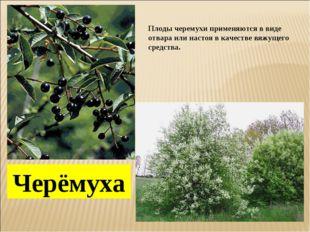 Черёмуха Плоды черемухи применяются в виде отвара или настоя в качестве вяжущ
