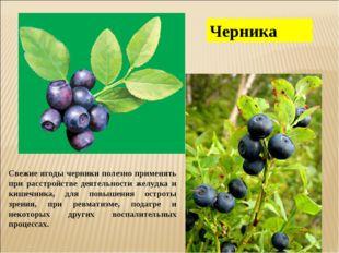 Черника Свежие ягоды черники полезно применять при расстройстве деятельности
