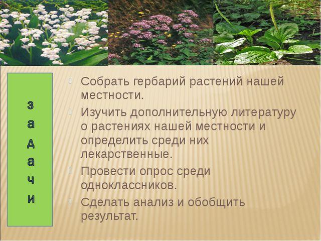 Собрать гербарий растений нашей местности. Изучить дополнительную литературу...
