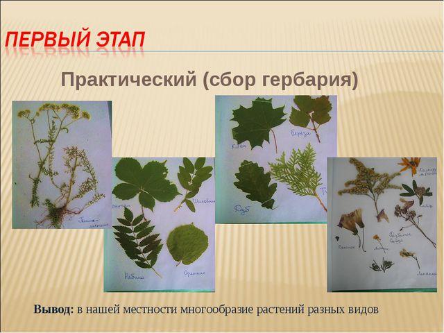 Практический (сбор гербария) Вывод: в нашей местности многообразие растений р...