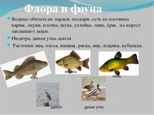 Водные обитатели:караси, пескари, есть на плотинах карпы, окуни, плотва, щук