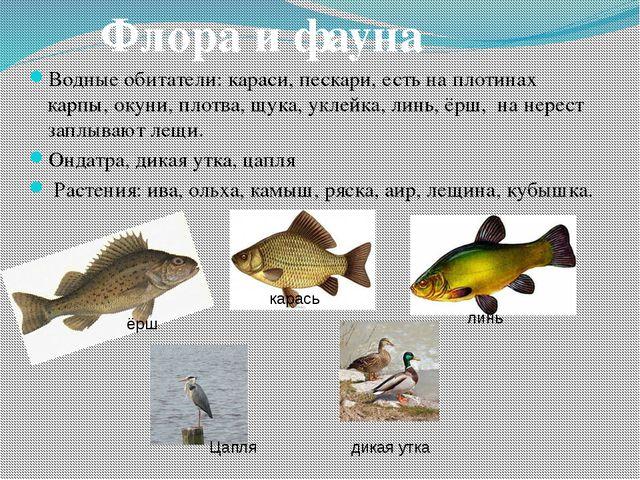 Водные обитатели:караси, пескари, есть на плотинах карпы, окуни, плотва, щук...