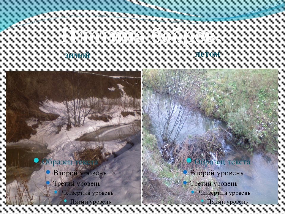 зимой летом Плотина бобров.