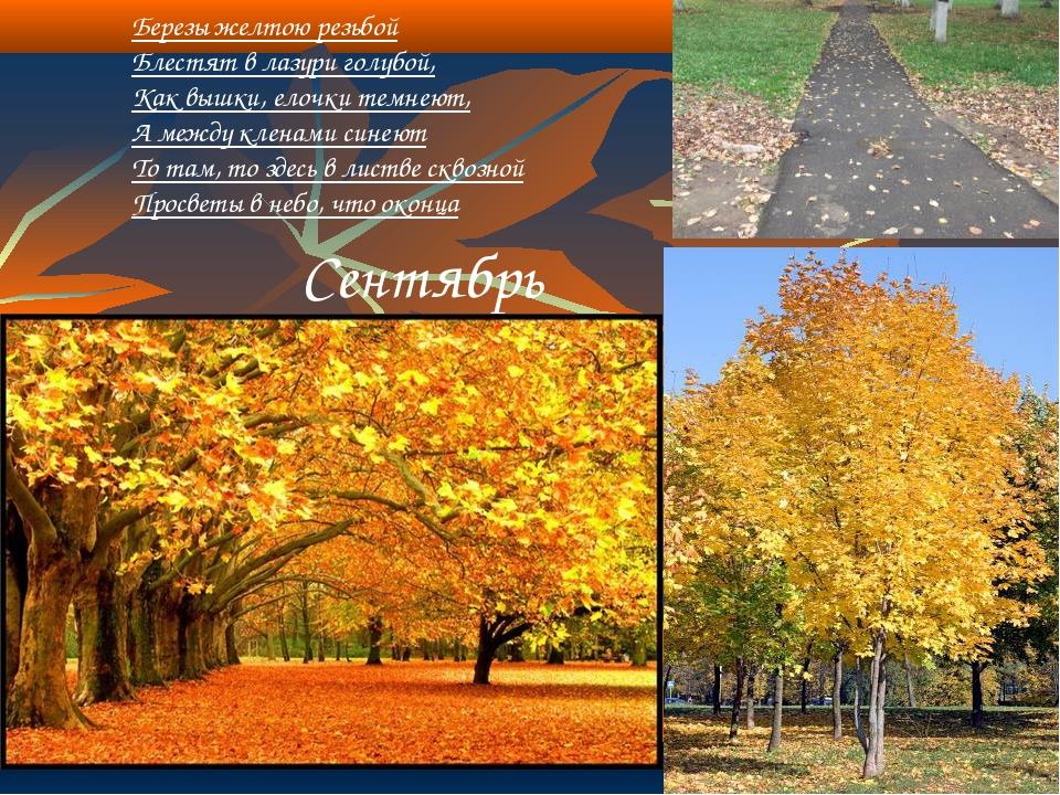 Сентябрь Березы желтою резьбой Блестят в лазури голубой, Как вышки, елочки т...