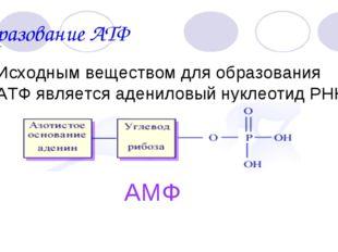 Образование АТФ Исходным веществом для образования АТФ является адениловый ну