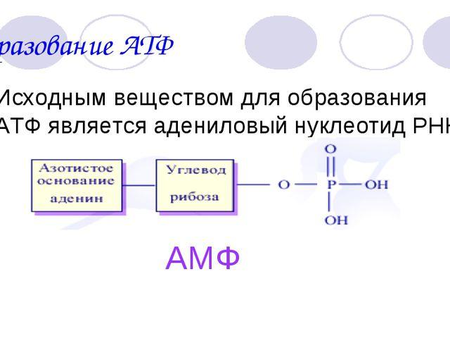 Биология атф 9 класс