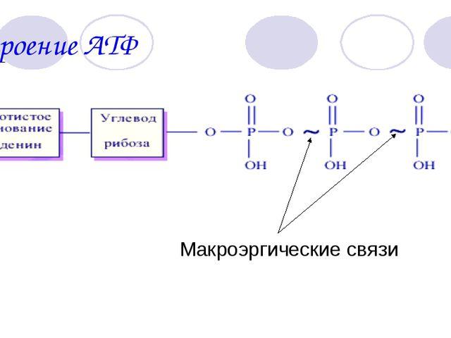 Строение АТФ Макроэргические связи