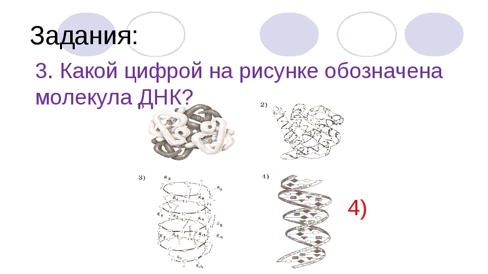 Задания: 3. Какой цифрой на рисунке обозначена молекула ДНК? 4)