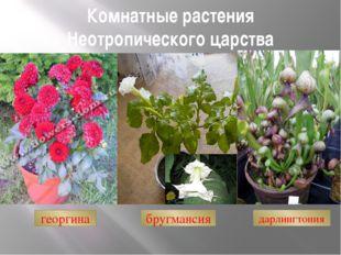 Комнатные растения Неотропического царства бругмансия дарлингтония георгина