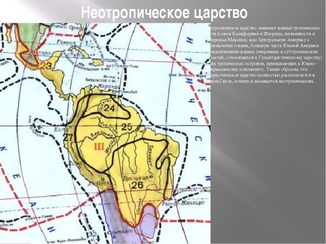 Неотропическое царство Неотропическое царство занимает южные тропические част...