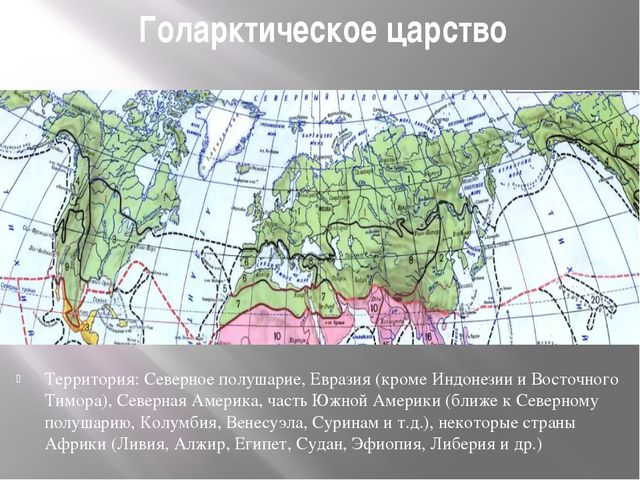 Голарктическое царство Территория: Северное полушарие, Евразия (кроме Индонез...