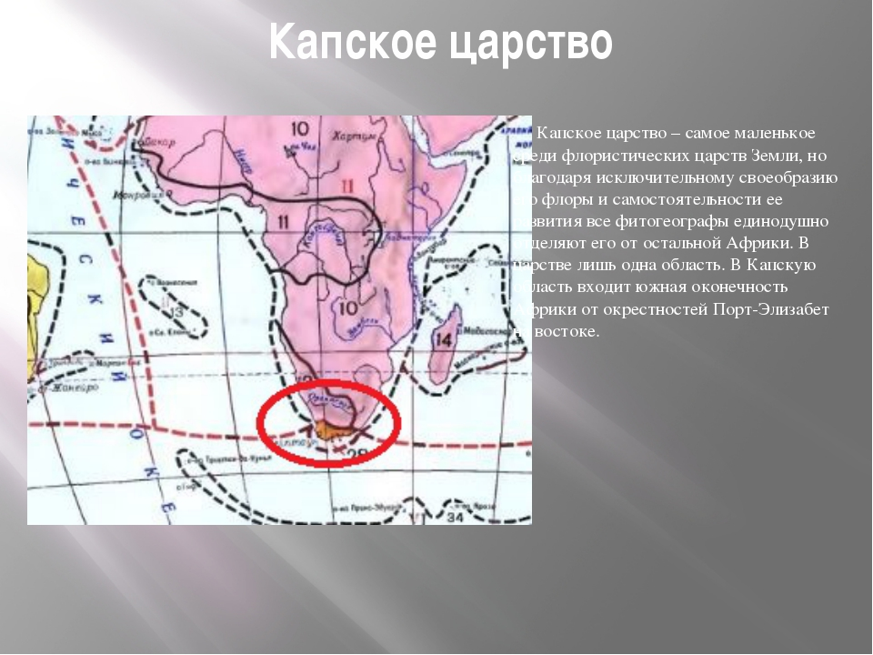 Капское царство Капское царство – самое маленькое среди флористических царст...