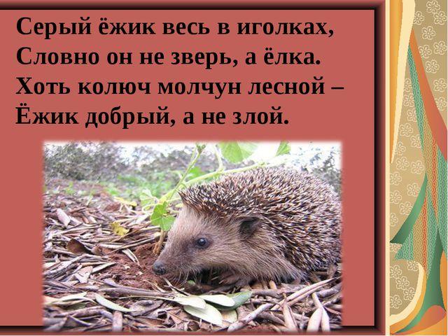 Серый ёжик весь в иголках, Словно он не зверь, а ёлка. Хоть колюч молчун лес...