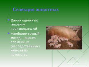 Селекция животных Важна оценка по генотипу производителей Наиболее точный мет