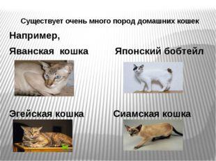 Существует очень много пород домашних кошек Например, Яванская кошка Японский