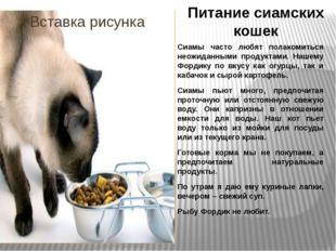 Питание сиамских кошек Сиамы часто любят полакомиться неожиданными продуктами