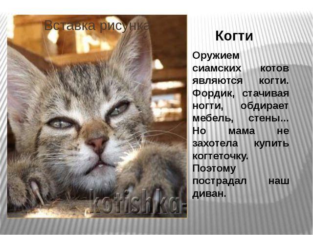 Когти Оружием сиамских котов являются когти. Фордик, стачивая ногти, обдирает...
