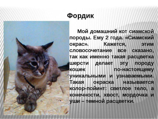 Фордик Мой домашний кот сиамской породы. Ему 2 года. «Сиамский окрас». Кажет...