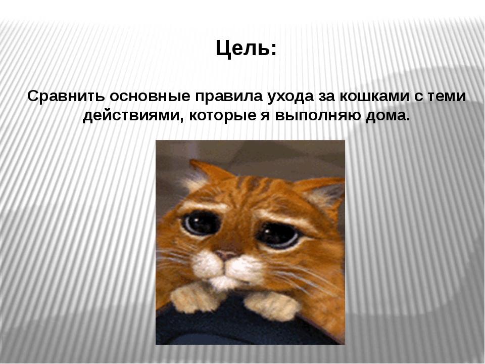 Цель: Сравнить основные правила ухода за кошками с теми действиями, которые я...