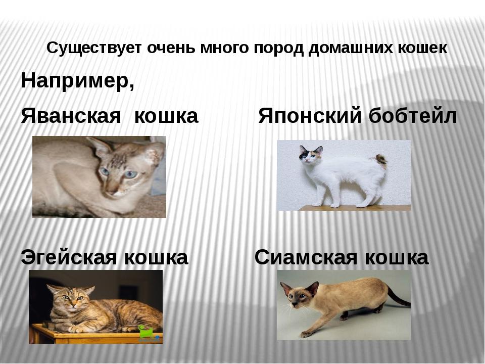 Существует очень много пород домашних кошек Например, Яванская кошка Японский...